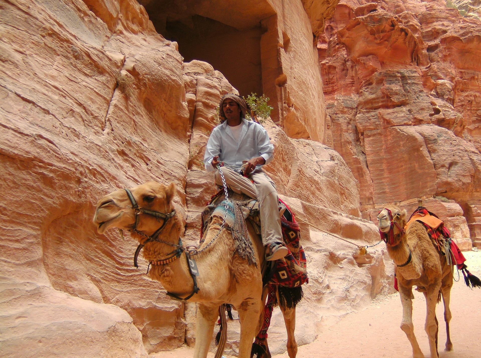 petra kamelsafari